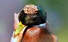 Do You Like My Hat  by Elaine Manley