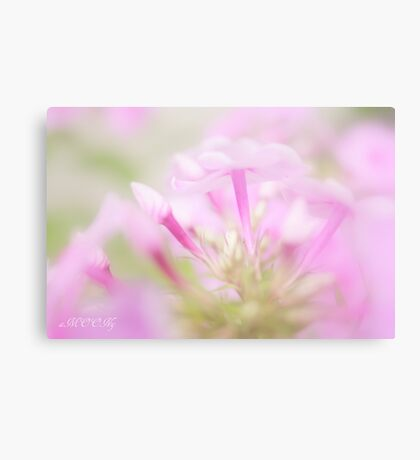 Pink softness Canvas Print