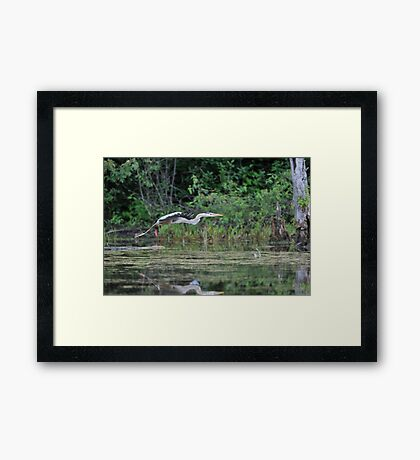 Off to find a quiet place Framed Print