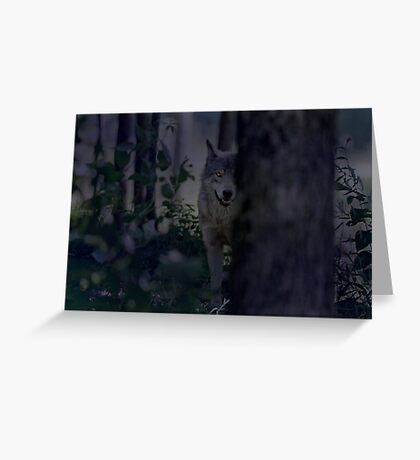 Night Visitor 2 Greeting Card