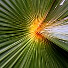 Palm leaf zoom by Esther  Moliné