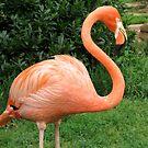 Flamingo by MaryGerken