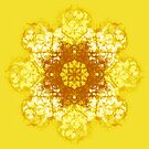 yellow flower by Agnew & Roberts