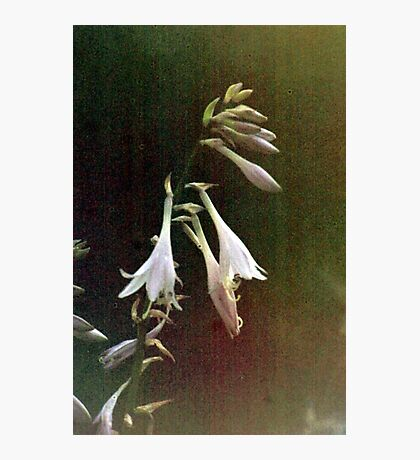 Timeless Beauty Photographic Print