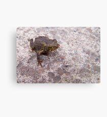 amphibian Metal Print