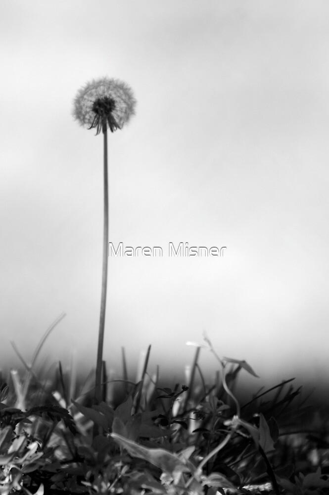 Dandelion by Maren Misner