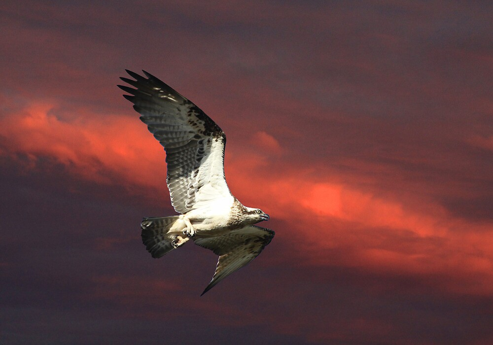 Heading for the Nest by byronbackyard