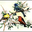 Songbirds - goldfinch, indigo bunting and scarlet tanager by ferinefire