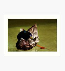 Duck, USA. Art Print