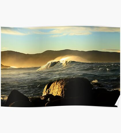 redbill beach swell. bicheno, tasmania Poster