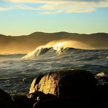 redbill beach swell. bicheno, tasmania by bodhiimages