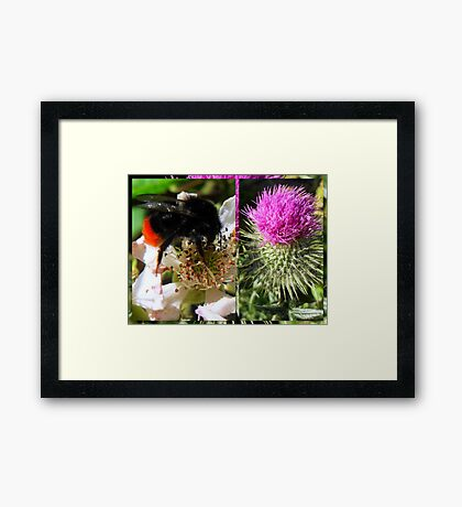 Sweet Nectar featured in The World As We See It or as we missed it. Framed Print