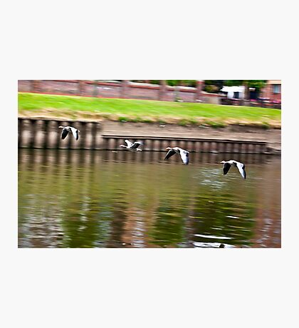Formation Flight on the River Ouse - York Photographic Print