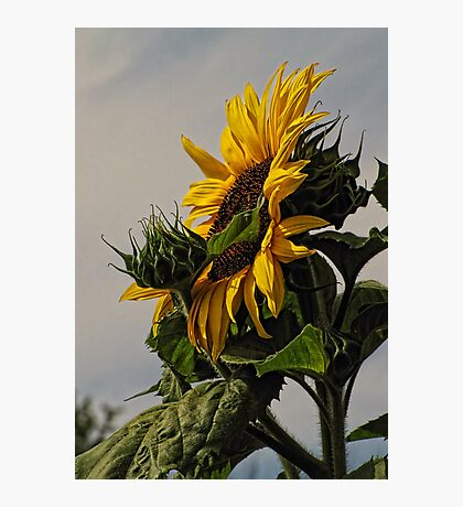 Rising with the Sun Photographic Print