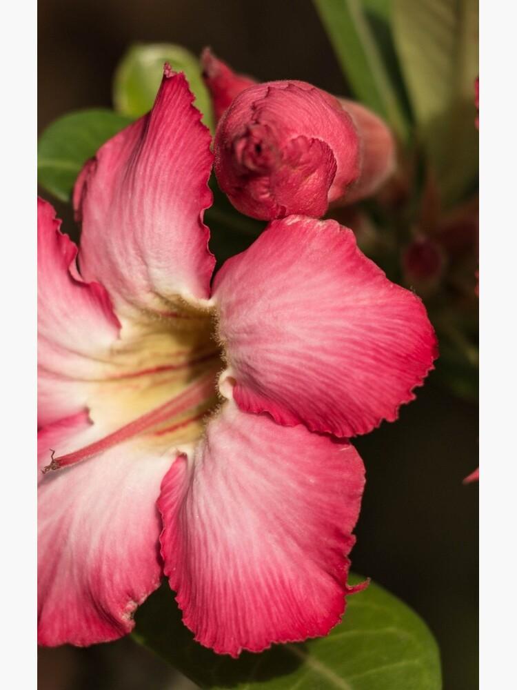 Hibiskusblüten von PageHope