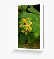 Wilde gelbe Blume Grußkarte