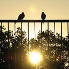 Sun Birds by AlbertStewart