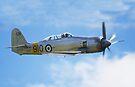 Hawker Sea Fury T20s by Nigel Bangert