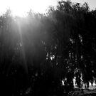 Sunburn by deepstarr7020