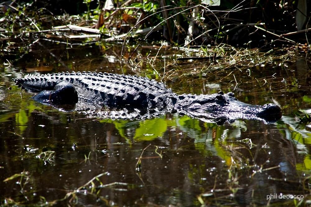 Sunning Gator by phil decocco