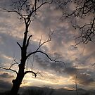 Silhouette and Tree by AlbertStewart