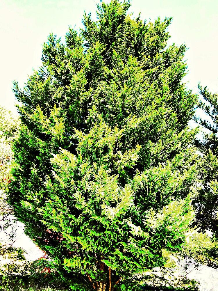 golden pine tree by woomera redbubble