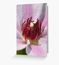 Clematis In Macro Greeting Card