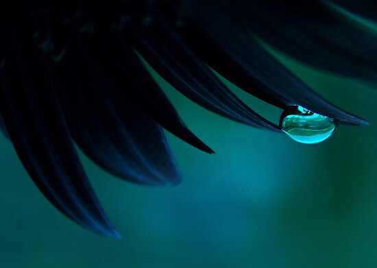Bubble Blue by Ingrid Beddoes