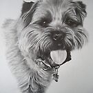 Border Terrier by Peter Lawton