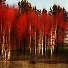 Autumn Birch Trees by Brian Tarr