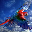 Macaw in Flight by Brian Tarr