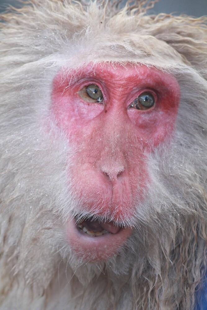 Wise old snow monkey, Japan by JulieKyte