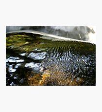 Fish Scales Photographic Print
