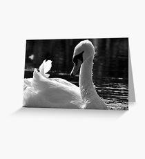 Swan beauty Greeting Card