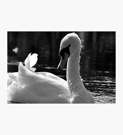 Swan beauty Photographic Print