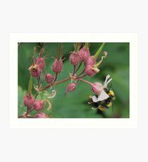Nectar & Pollen bee Art Print