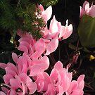 Pink Ladder by AlbertStewart