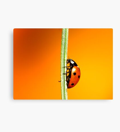 Straight-Up.. Canvas Print