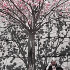 cherry blossoms in Japan -- a zen monk  by Ljikob