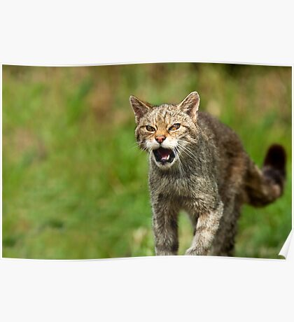 When Wild Cats Attack Poster