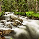 Roosevelt National Forest Stream by Bo Insogna