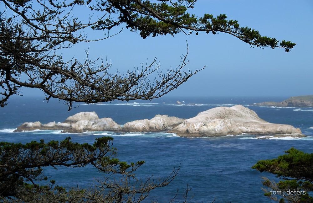 Coastline through Trees by Tom Deters