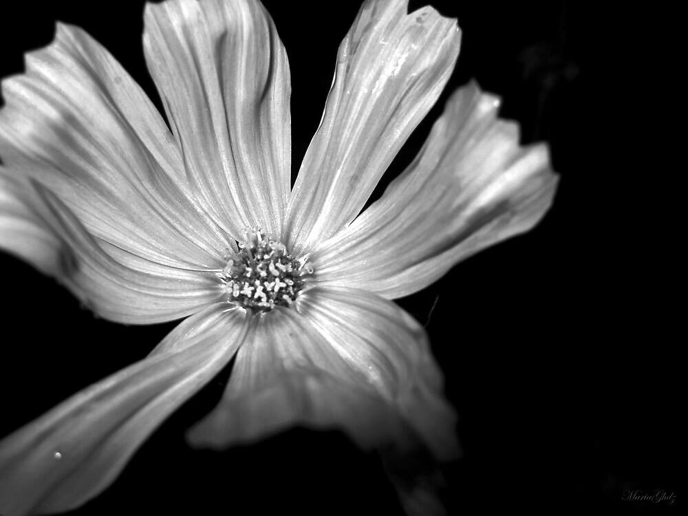 White Soul by Maria Hernandez