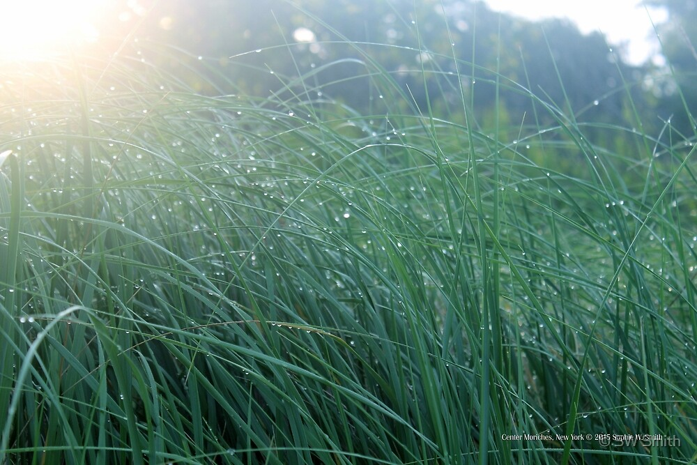 Morning Dew | Center Moriches, New York by © Sophie W. Smith