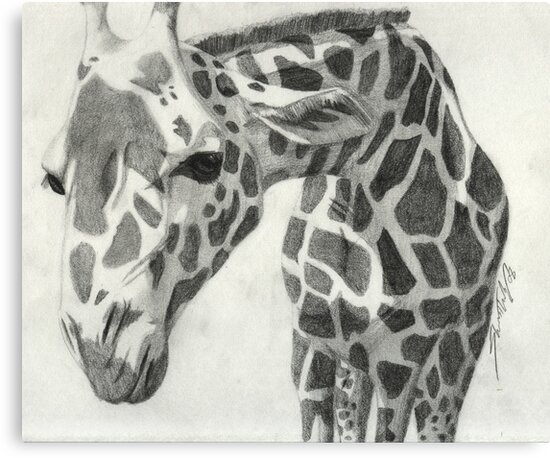 A giraffe in pencil by agenttomcat