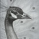 A peacock in pencil by agenttomcat