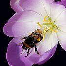 Pollen Footprints by Gareth Jones