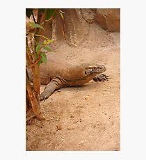 komodo dragon Photographic Print