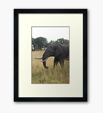 The Wise Man Framed Print