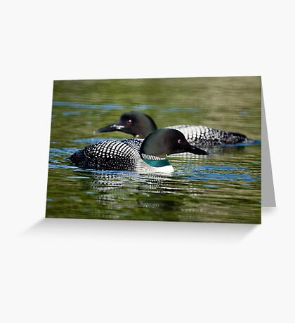 Two Loons Greeting Card